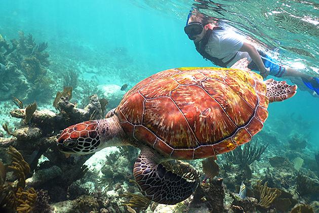 Kilpikonnaa tasatahtiin