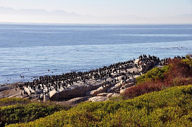 Kallioilla saattaa olla paljon muitakin lintuja kuin pingviinejä