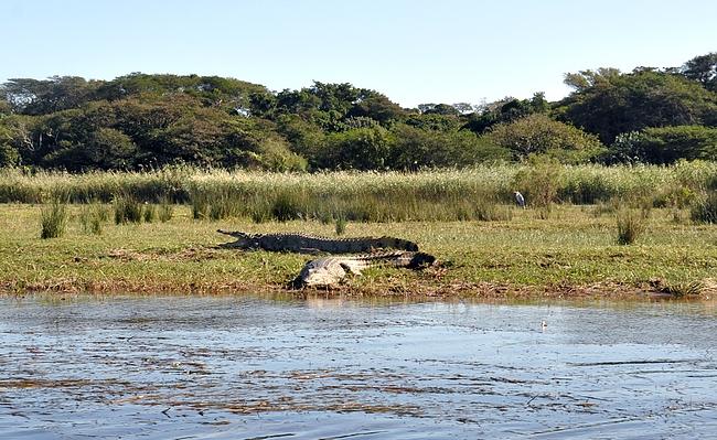 Niilin krokotiilejä