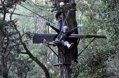 Vaijeriliut olivat todella vauhdikas kokemus isojen puiden latvoissa parhaimmillaan parisataa metriä maan pinnan yläpuolella.