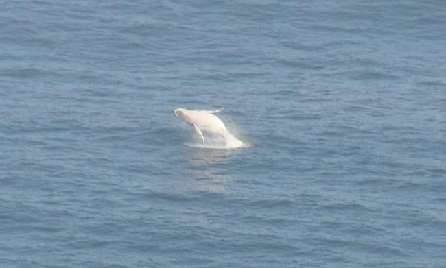 Ryhävalaita katsellessa aika vierähti nopeasti