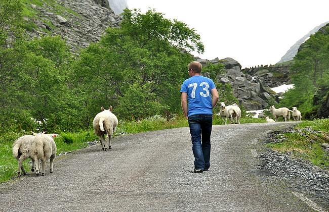 Lammaspaimen työssään.