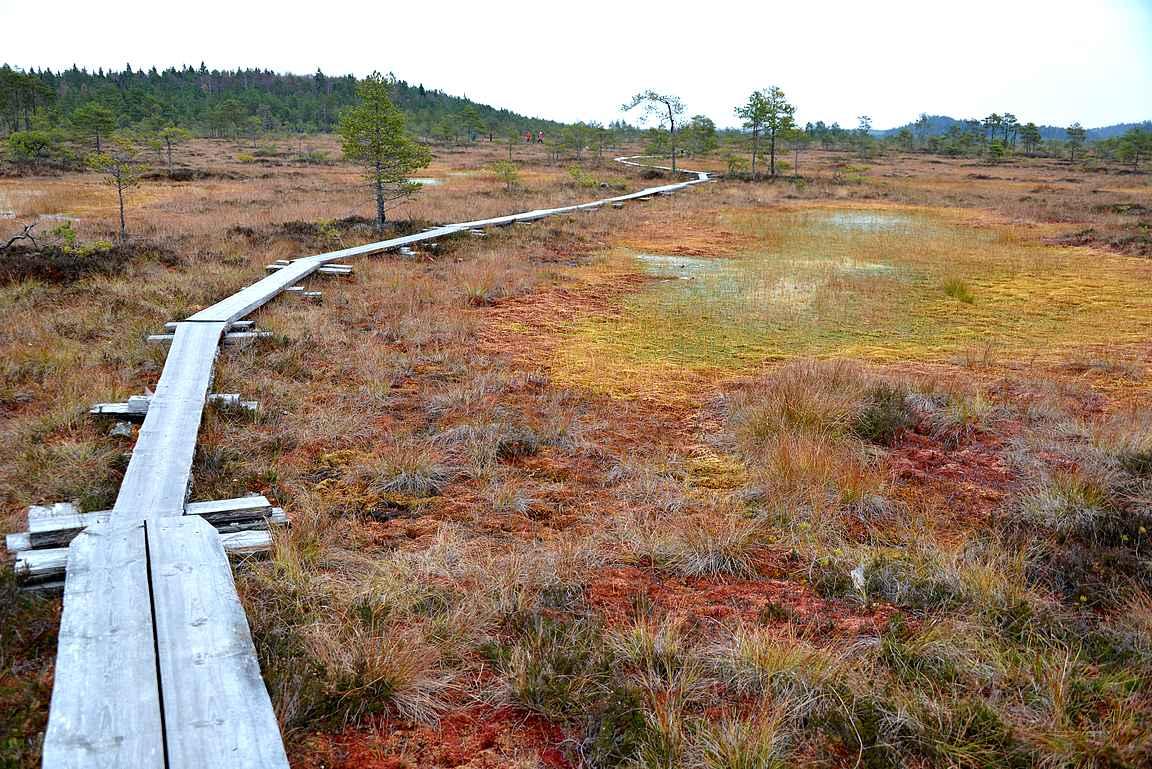 Torronsuon kansallispuisto on yksi Etelä-Suomen upeimpia päiväretkikohteita.