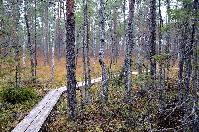 Suomen kansallispuistot - Torronsuo