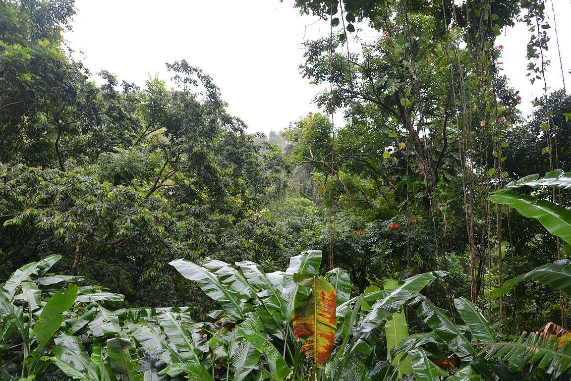 El Yunque, Puerto Rico