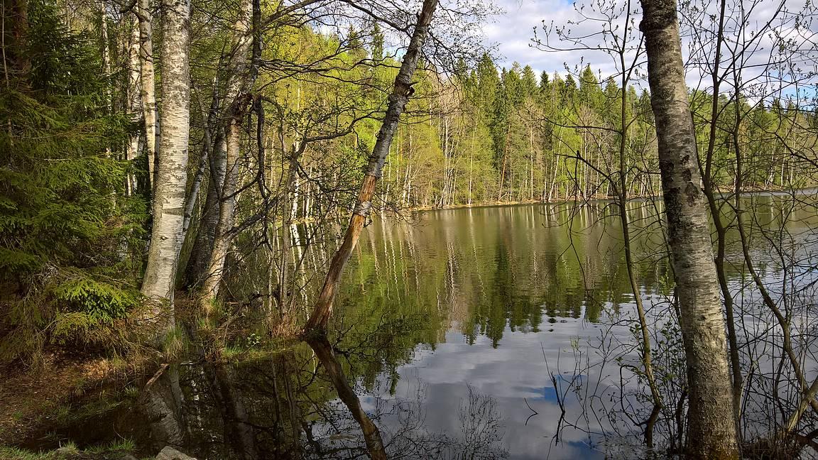 Suolijärven rantamaisemia.