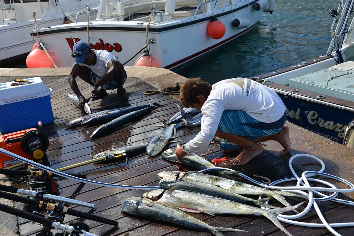 Kalastajat pesevät ja perkaavat tuoretta Mahi Mahia.