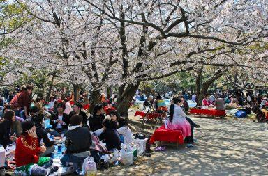 10 syytä mennä Fukuokaan