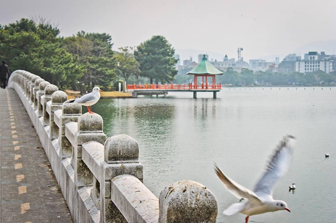 Ohori-puisto copyright Lotta Watia.