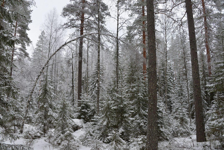 Isojärven kansallispuisto - Heretyn luontopolku