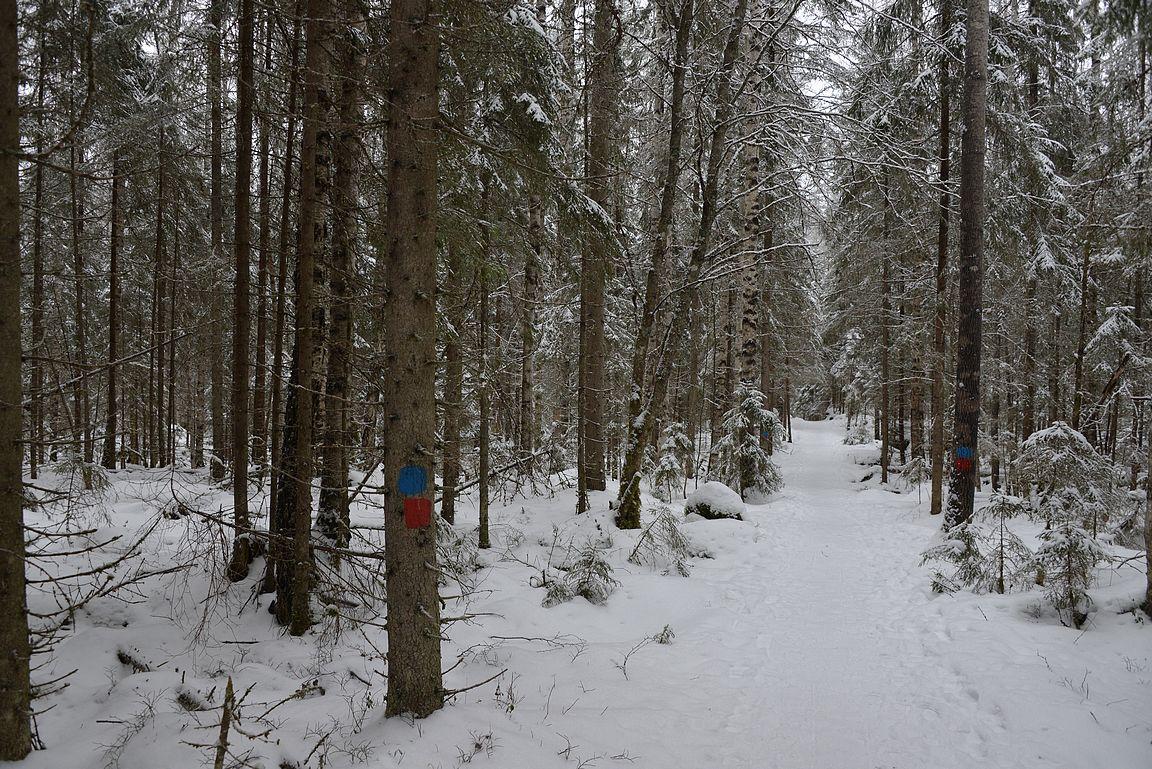 Punainen merkki oli luontopolkua ja sininen pidempää patikointireittiä näyttävä.