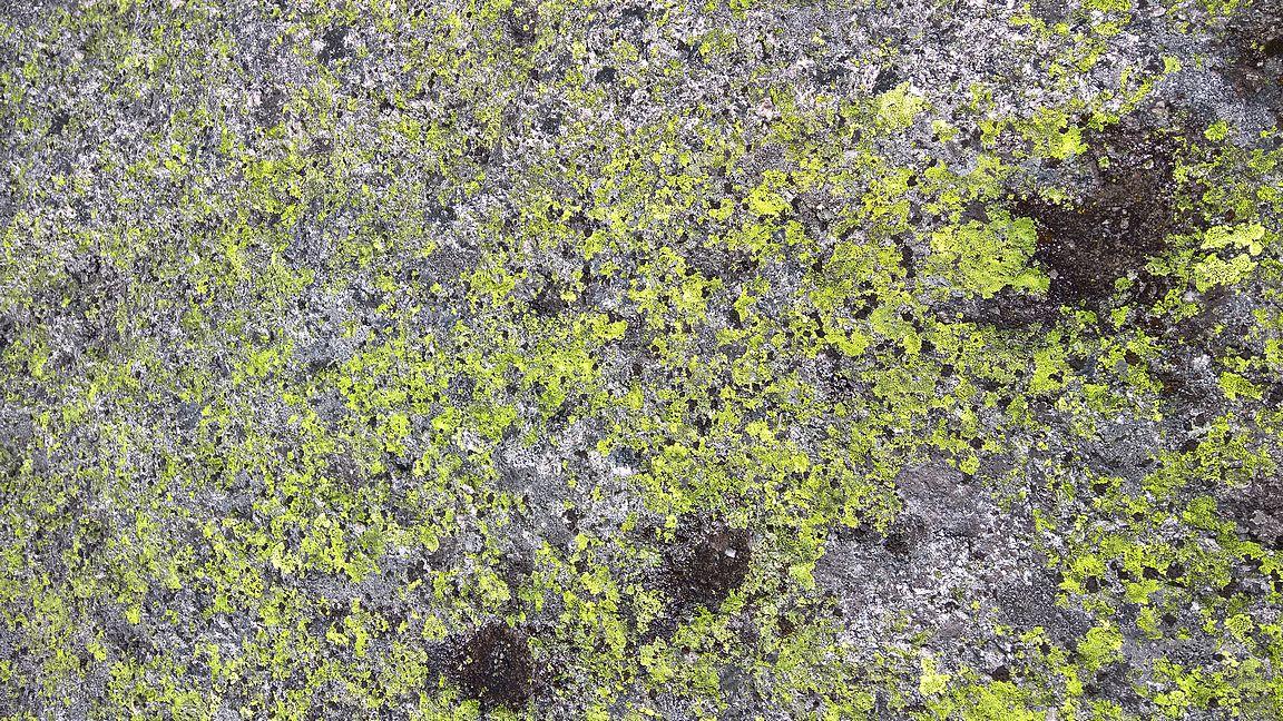 ... se kolmella vaelluksella tuli opittua, että tällaisellä vihreällä sammaleella pito on erinomainen.