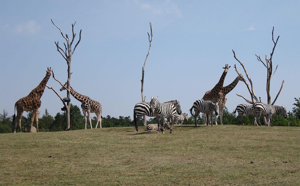 Givskogin eläintarhassa näkee Afrikan eläimiä lähietäisyydeltä.