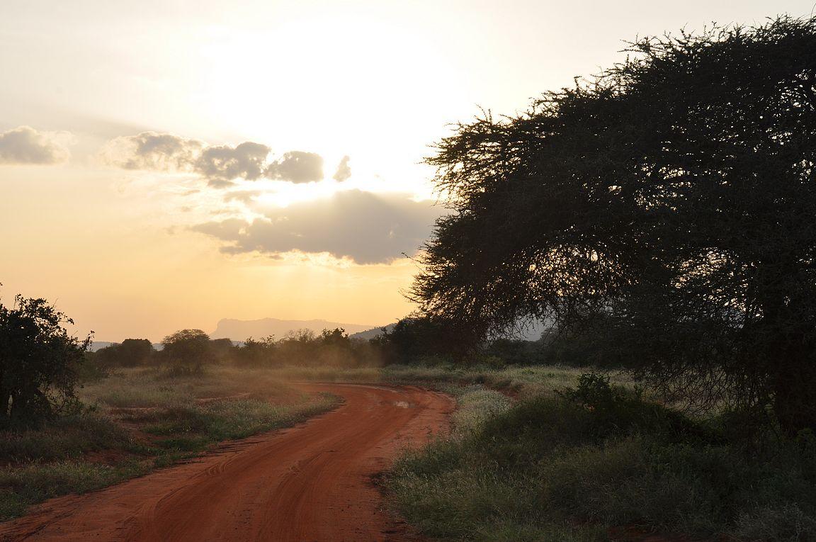 Auringonlasku laittaa eläimet liikenteeseen.