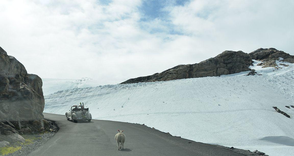 Laskettelijat ja lampaat suvassa solussa kohti jäätikköä.
