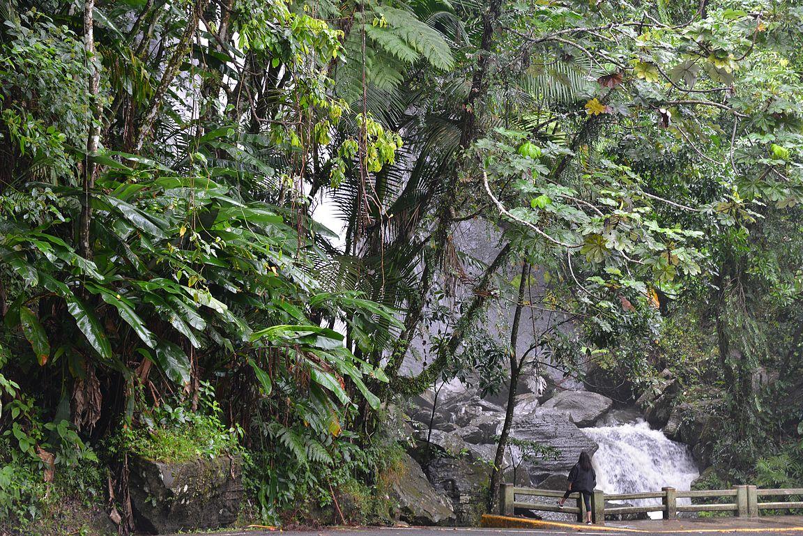 El Yunquen trooppinen sademetsä pitää sisällään lukuisia vesiputouksia.