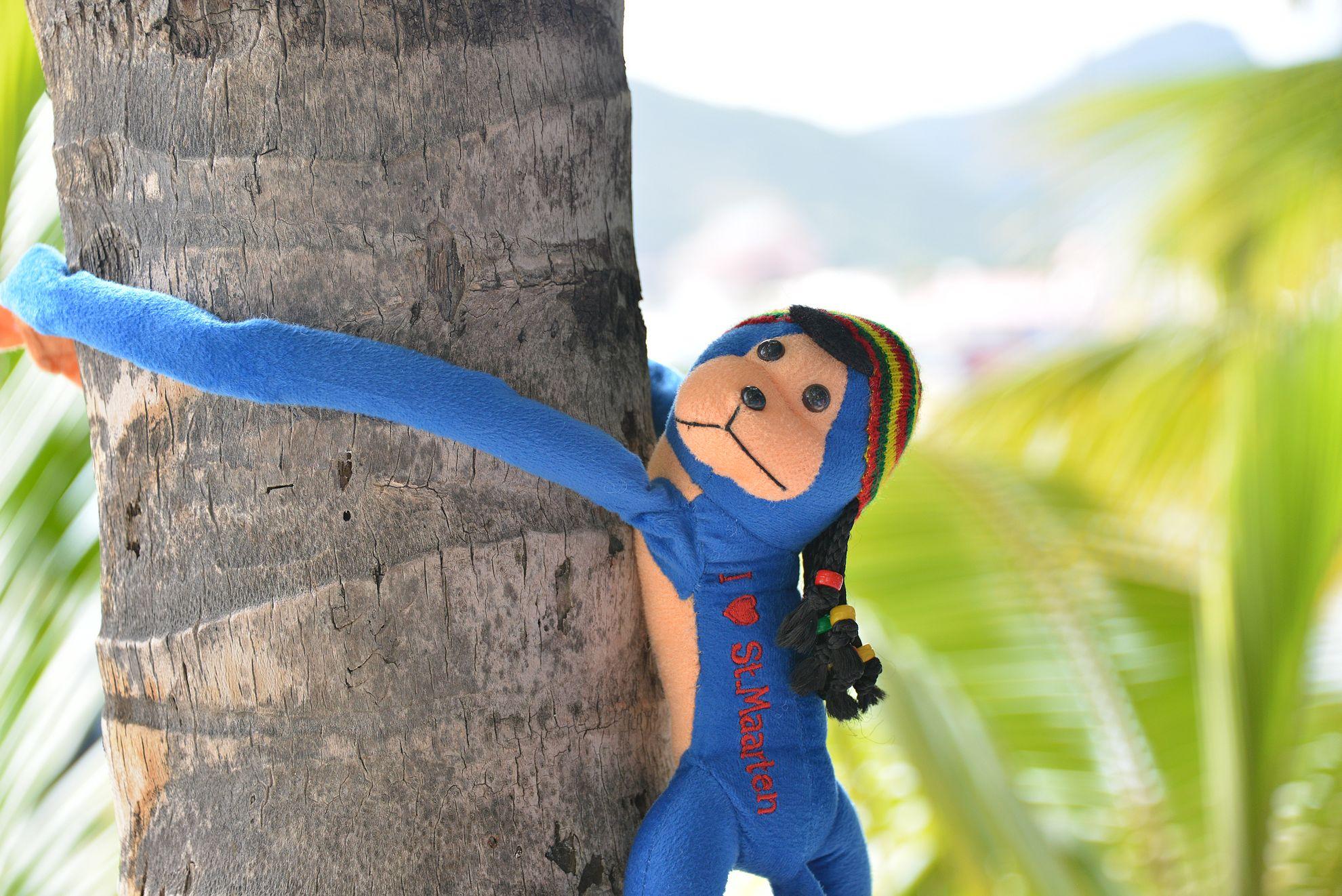 Ekalla reissulla sininen rasta-apina unohtui majapaikkaan ja seuraavalla reissulla hommattiin uusi. Nyt alkaa rastoja pitävät helmet olemaan revityt ja pumpulit pursuavat mahasta ulos. Eli pitäisi varmaan alkaa suunnitella kolmatta reissua St. Maartenille uuden apinan hakuun...