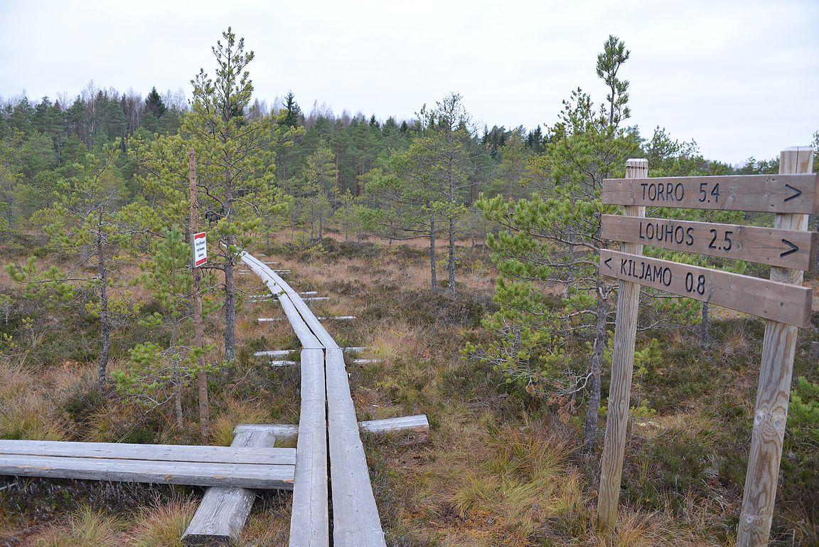 Kiljamon parkkipaikalta lähtee myös puolentoista kilometrin pieni tutustumisreitti Torronsuohon...