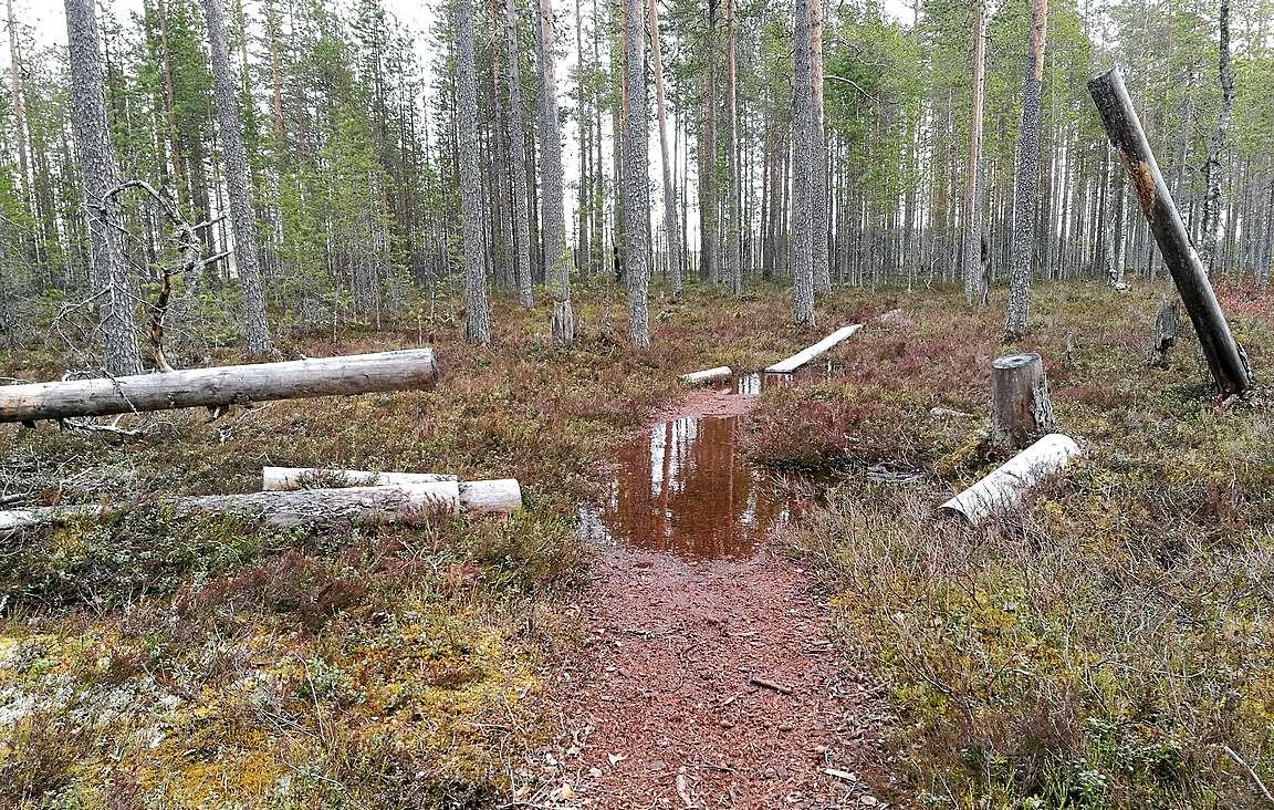 Reitin ensimmäiset sadat metrit olivat metsäpolkujen ja pitkospuiden yhdistelmäosuuksia.