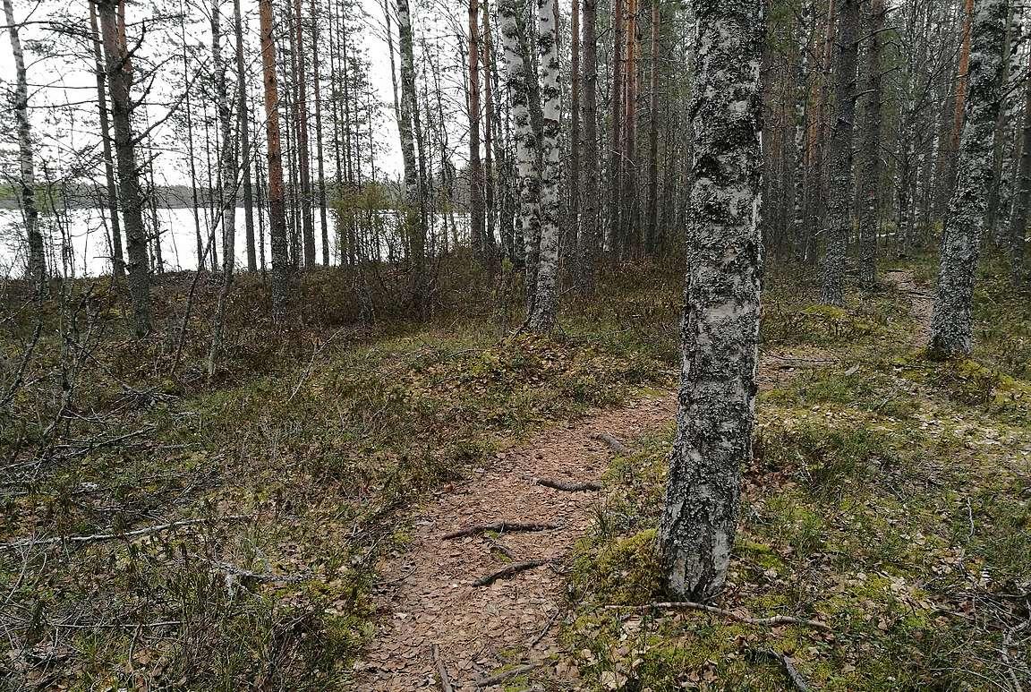 Viimeinen kilometri taittui metsämaisemassa Suomunjärven rantaviivassa.