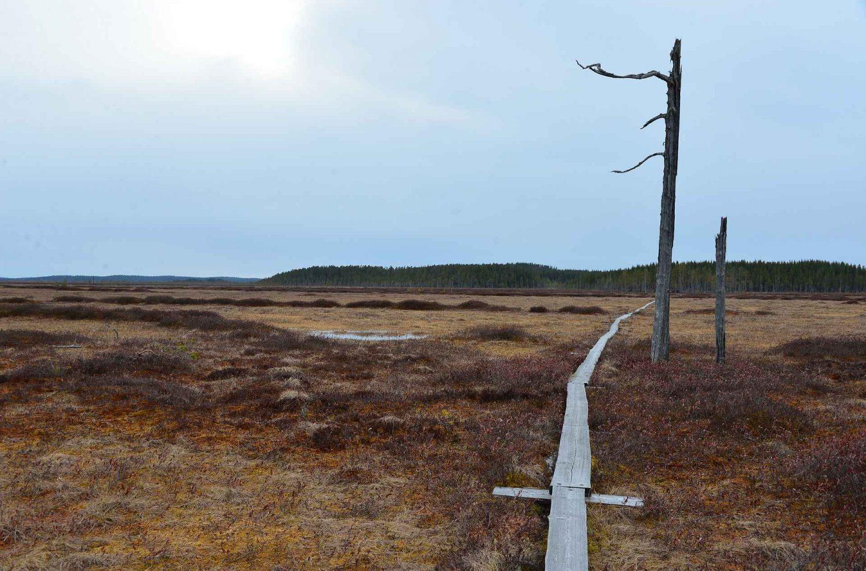Patvinsuon kansallispuisto - yksinäinen patikoija erämaassa
