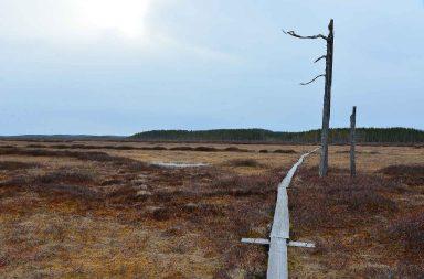 Vaikka kansallispuistoja ei kannata paremmuusjärjestykseen laittaa, niin Patvinsuon kansallispuisto kuuluu ilman muuta omiin Top3 kokemuksiin maisemien puolesta.
