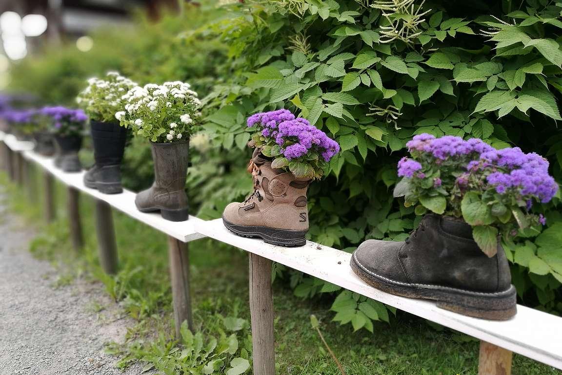 Kenkäverossa on kengille löytynyt hyötykäyttöä.