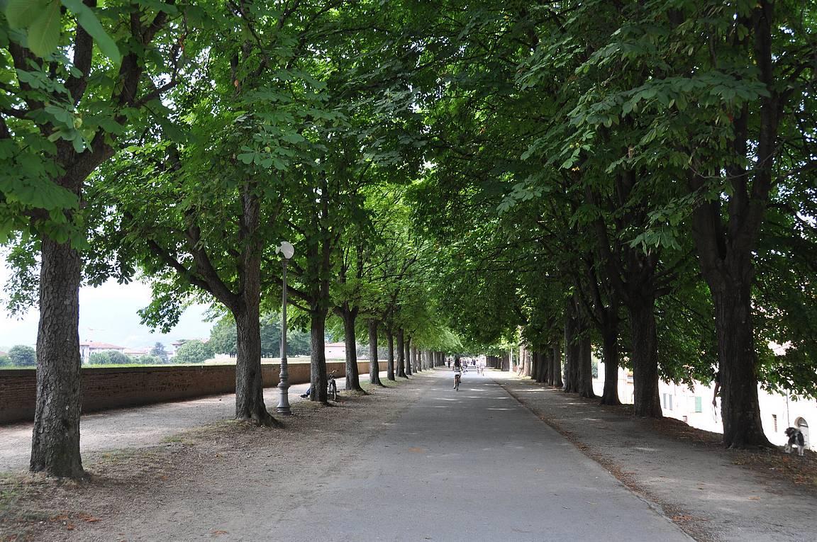 Luccan muurit kiertää ympäri kaupungin.