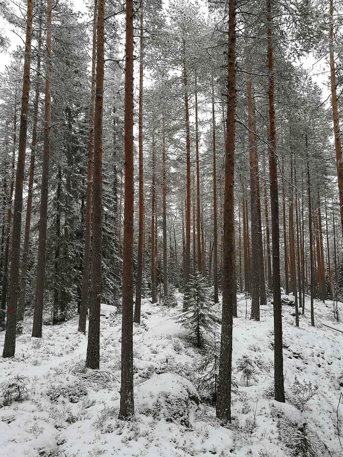 Liesjärven kansallispuiston rauhaa.
