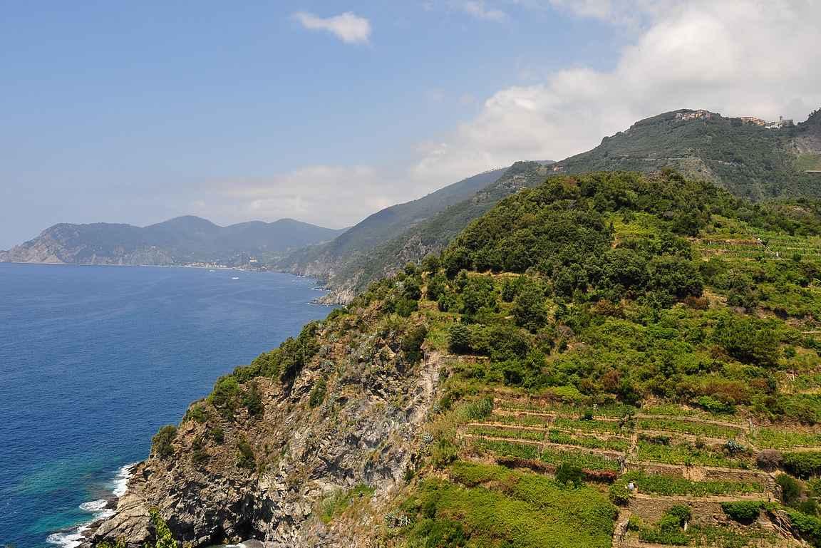 Corniglion kylästä avautuu upeat näkymät vuoren rinteillä sijaitseville viiniviljelmille. Huom! Patikointipolku kohti Vernezzaa menee tuolla jossain.