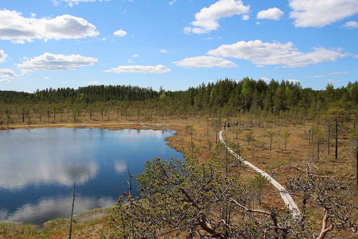 Joukkueemme saapuu Leivonmäen kansallispuistossa Haapasuon lintutornille copyright Hanna Hauvala, JAMK