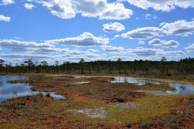 Mitä tehdä Keski-Suomessa - makumatka luontoon ja ruokakulttuuriin