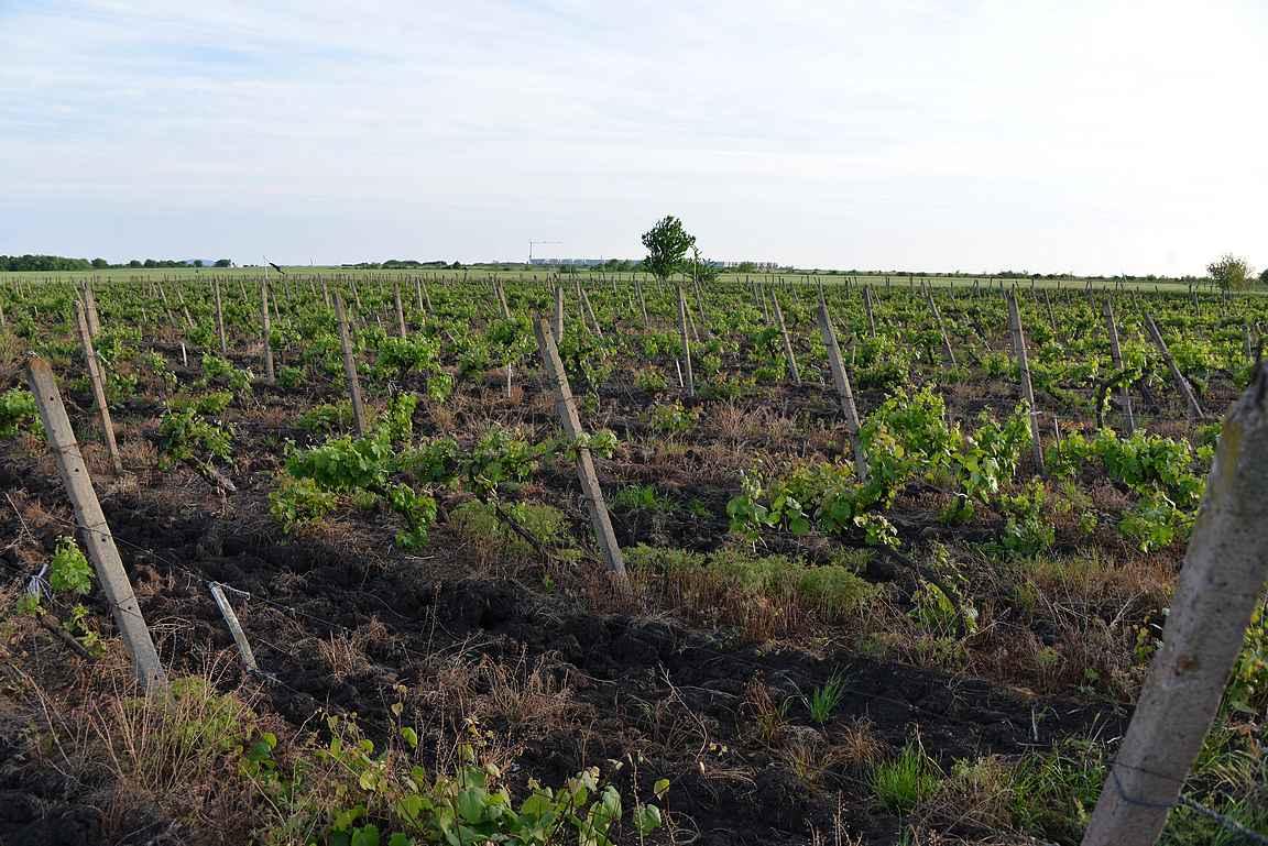 Bulgaria viinit yllättävät laadullan monet matkailijat positiivisesti.