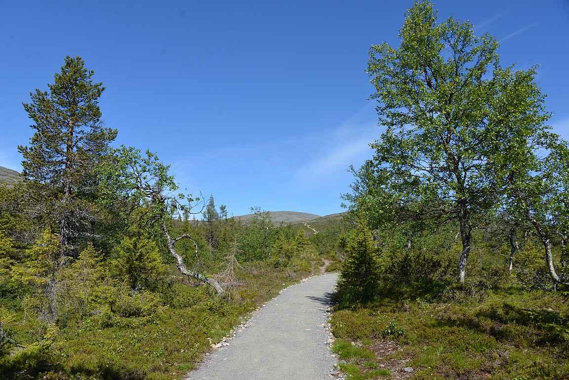 Ensimmäiset sadat metrit liikuttiin matalan puuston suojissa.
