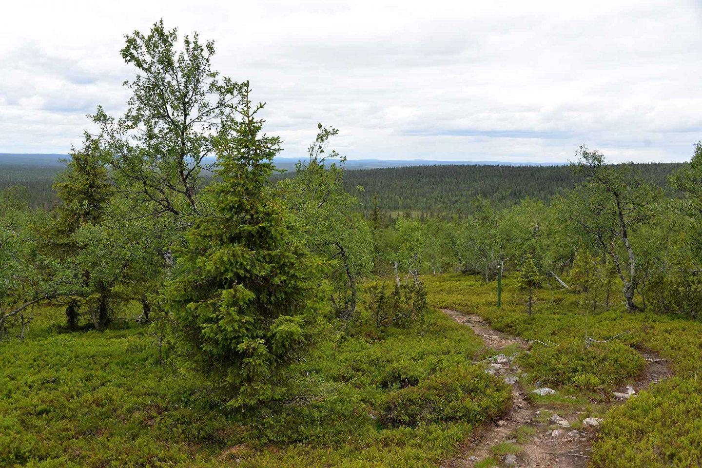 Urho Kekkosen kansallispuisto - Tankavaaran reitit