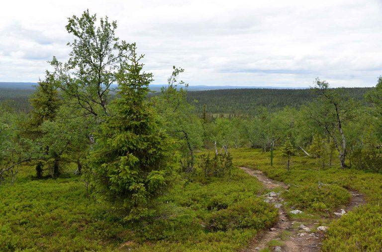 Urho Kekkosen kansallispuisto
