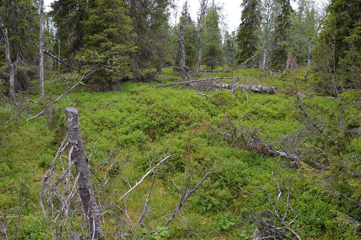 Geologisen polun metsämaisemaa.