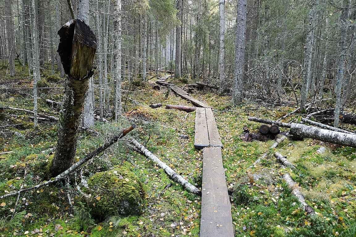 Pitkospuita pitkin oli mukava kävellä - vaikka alkuperäisellä reitillä ei oltukaan.