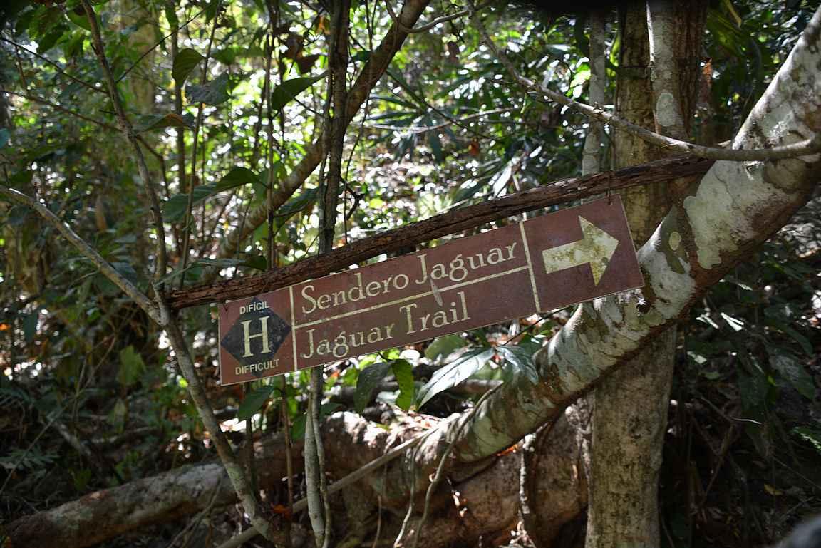 Jaguar Trail lähtee rannasta kiipeilemään keskelle viidakkoa.