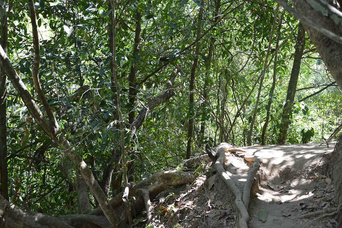 Jaguar Trail oli haastava, joskin mielenkiintoinen luontopolku.