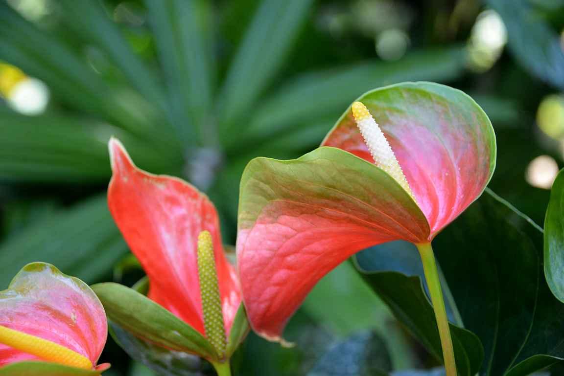 Kukkien kauneutta -> saa ilmiantaa kukan nimen, jos tietää...