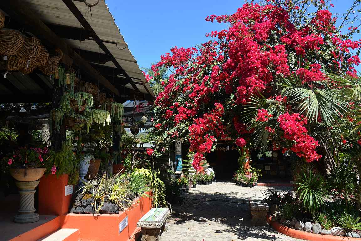 Puerto Vallartan kasvitieteellinen puutarha.
