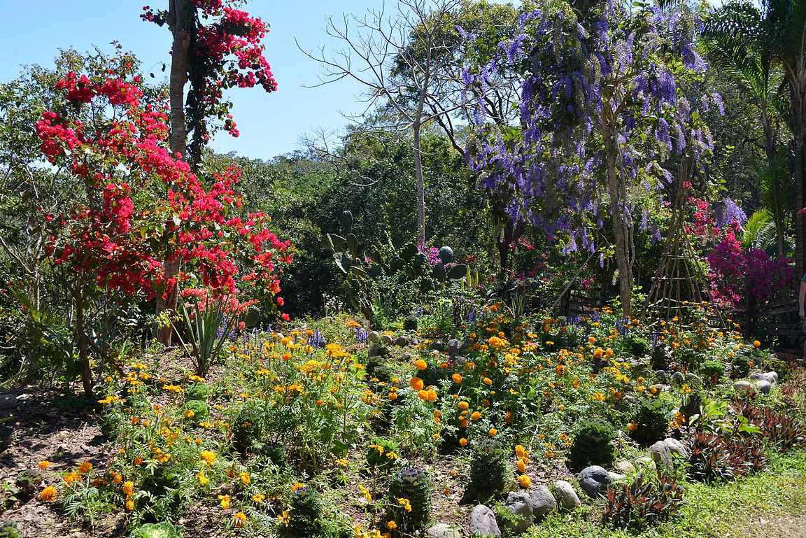 Paluu kasvitieteellisen puutarhan kukkaloistoon.