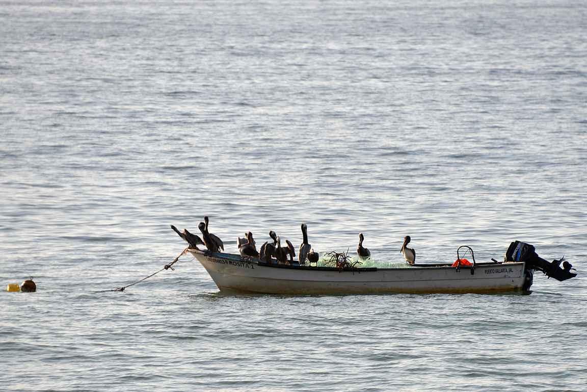 Vaihtoehtoisesti isommalla porukalla voi lähteä veneellä kalaan.