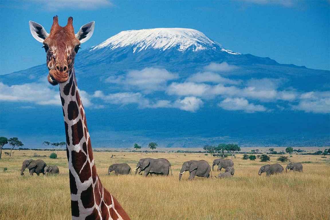 Seuraavaksi Kilimanjarolle? copyright Matkatoimisto Aventure