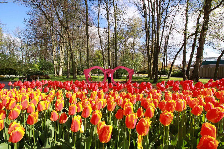 Hollannin kevät - Tulppaaneita, tuulimyllyjä ja Kuninkaan synttärijuhlat