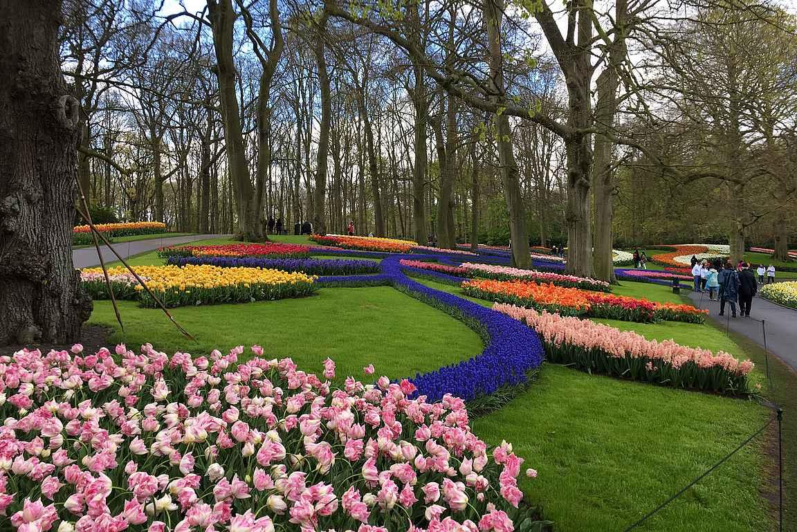 Keukenhofin kukkaloisto on keväisin Hollannin suosituin reissukohde.