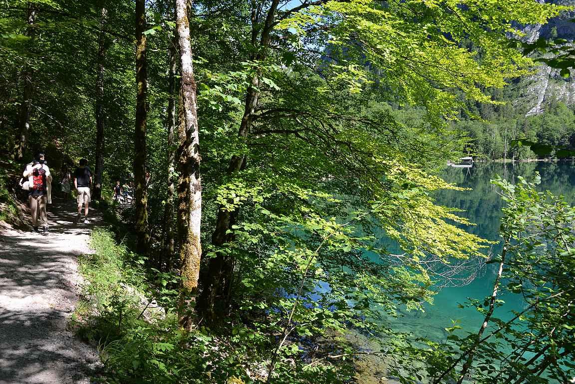 Obersee-järven rantareunaa pitkin voi patikoida järven toiseen päähän ja vesiputoukselle.