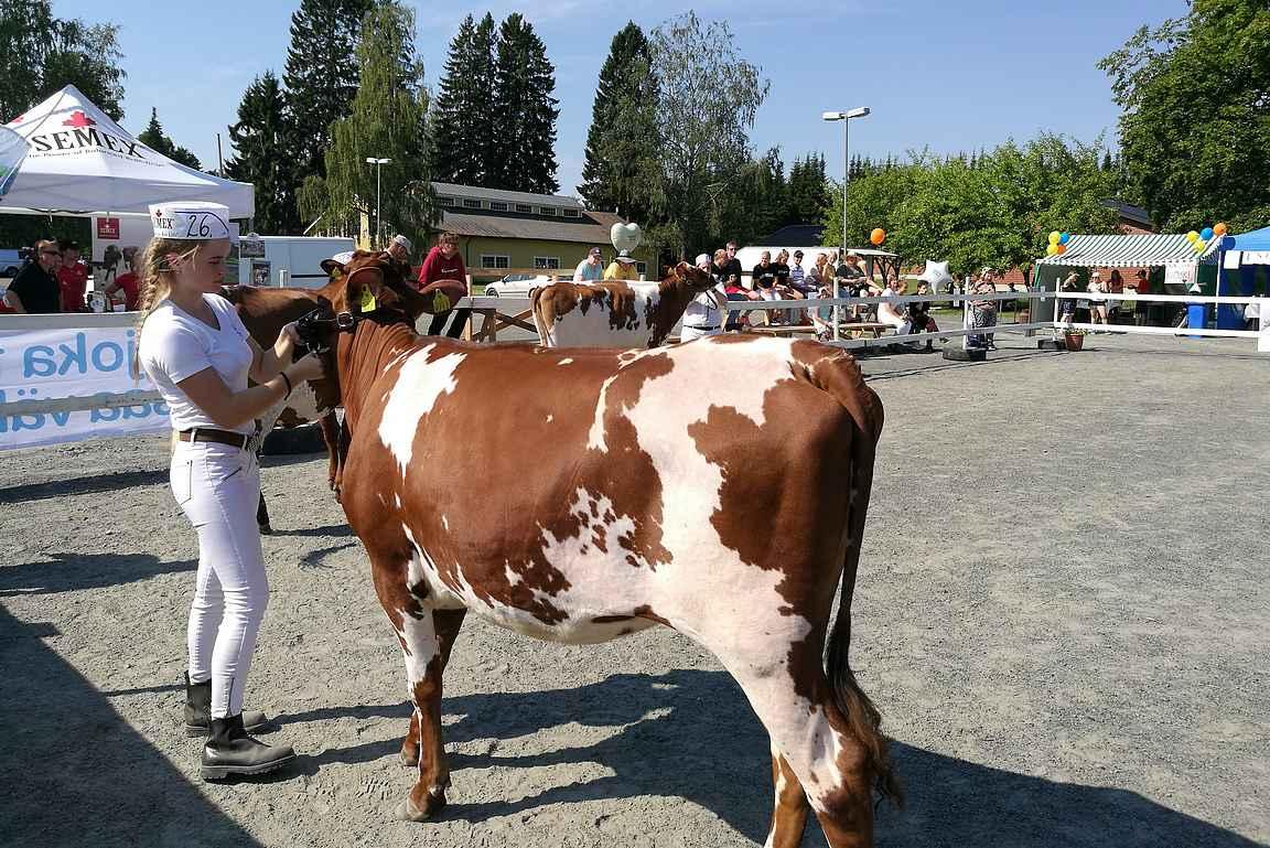 Ammujaiset karjanäyttely pidetään kahden vuoden välein. Vuonna 2018 se pidettiin Mustialassa, toivottavasti myös vuonna 2020.