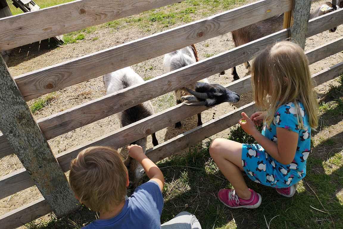 Jokioisissa sijaitseva Elonkierto tutustuttaa lapset maatalouden eri muotoihin.